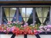 blumenfenster2